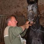 dentiste equin