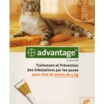 advantage-chat-40