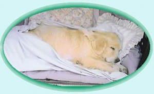 euthanasie d'un animal de compagnie