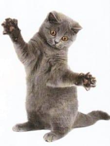 dégriffage du chat