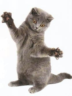 D griffage du chat ne touche pas mes griffes conseils veterinaires de patrick - Perte de poils chez le chat ...