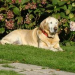 enterrer son chien dans son jardin