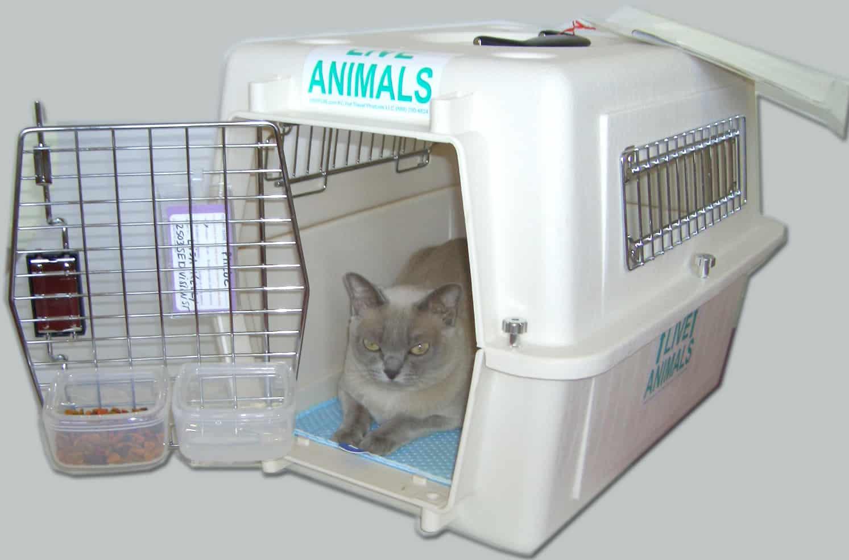 comment transformer la cage transport du chat en un espace. Black Bedroom Furniture Sets. Home Design Ideas