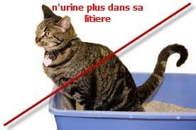 malproproté_du_chat