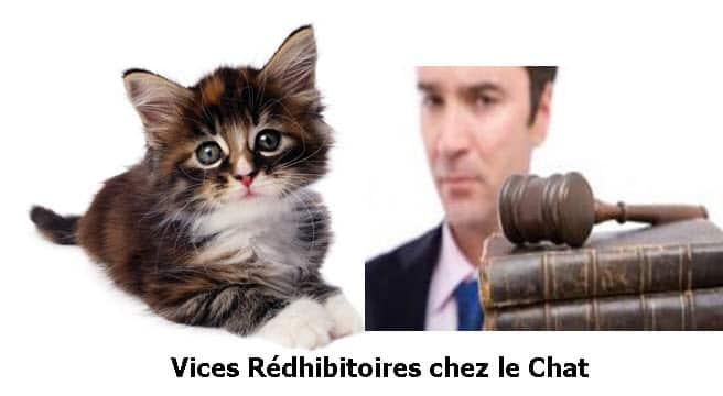 vices_rédhibitoires_chez_le_chat