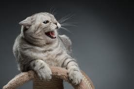 chat_peur