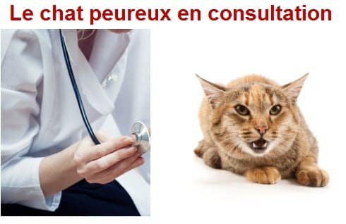 chat peureux en consultation