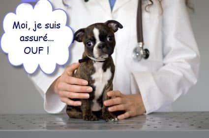 assurance sante pour animaux de compagnie