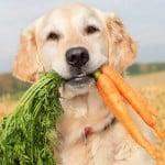 carotte_pour_le_chien.jpg