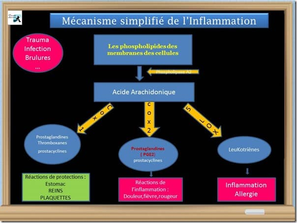 mecanismes de l'inflammation simplifié