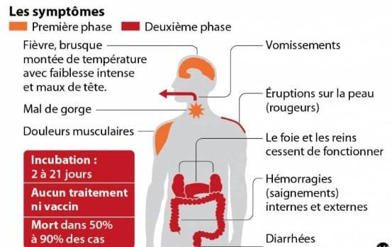 La Maladie D Ebola Chez Le Chien Existe T Elle Conseils Veterinaires De Patrick