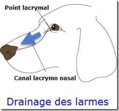 drainage_larmes