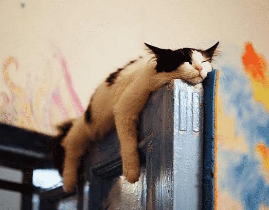 chat-dormeur-porte