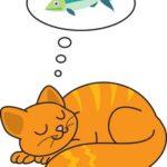 sommeil-du-chat