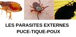parasites-externes