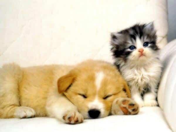 Un couple devant choisir entre un chat ou un chien - Conseils d'un ...