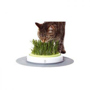 Jardin d'herbe Senses Design Cat It
