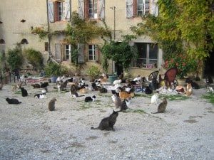 collectivité de chats