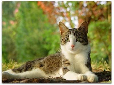 conseils pour garder votre chat senior en bonne forme conseils du v t rinaire. Black Bedroom Furniture Sets. Home Design Ideas