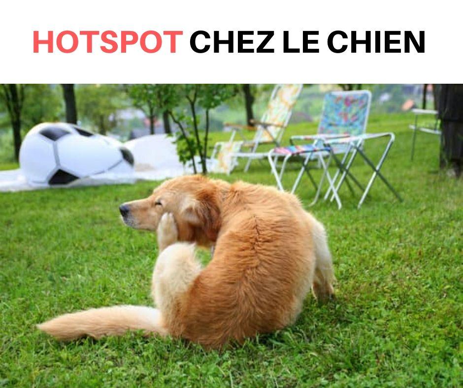 Connaissez Vous Le Hotspot Chez Le Chien Conseils