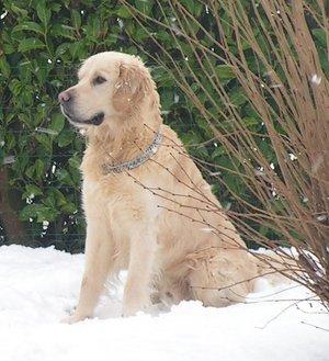 protéger son chien du froid