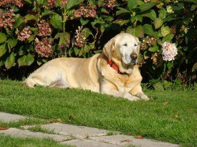 enterrer son chien dans son jardin sans chaux design de maison. Black Bedroom Furniture Sets. Home Design Ideas