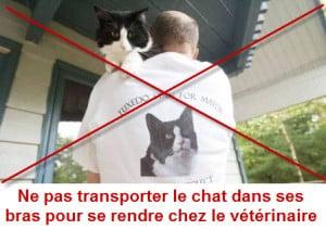 chat_transporte_dans les bras_non