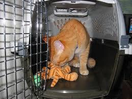 jouet_cage_transport