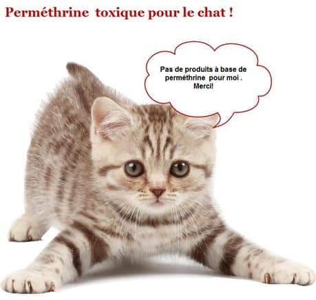 intoxication-permethrine-chat