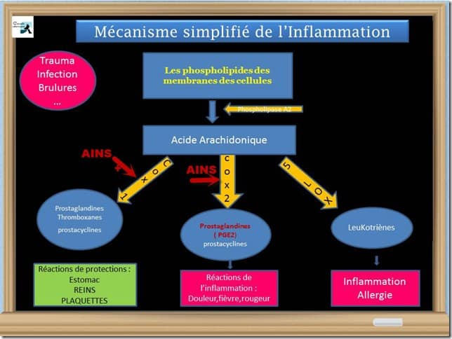 ACTION-AINS-INFLAMMATION