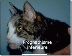 prognathisme inferieure