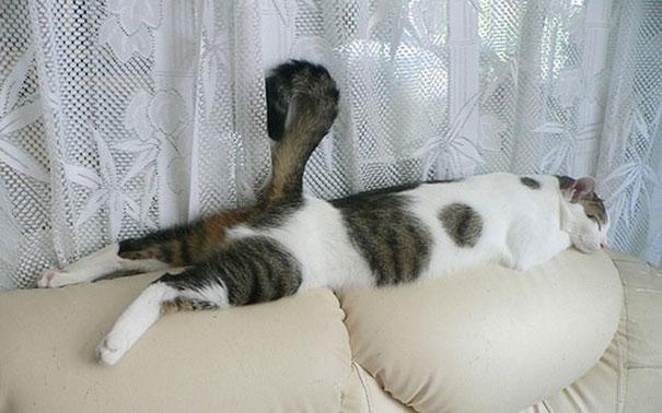 chat-dormeur-divan