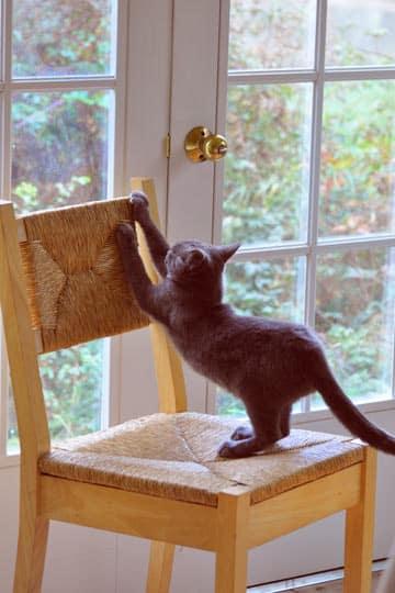 griffades-du-chat