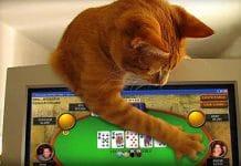 joueur-poker--chat
