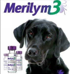 vaccin-merilym