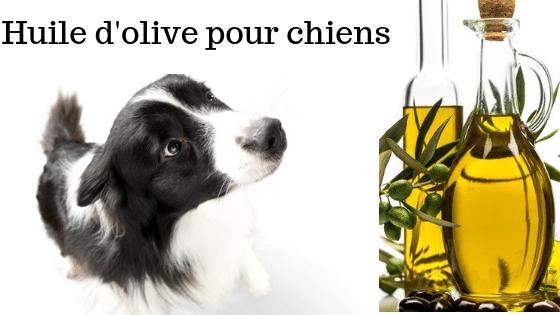 huile-d-olive-pour-chiens