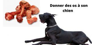 os à son chien