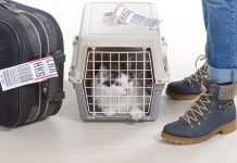 alimenter son chat prendre avion