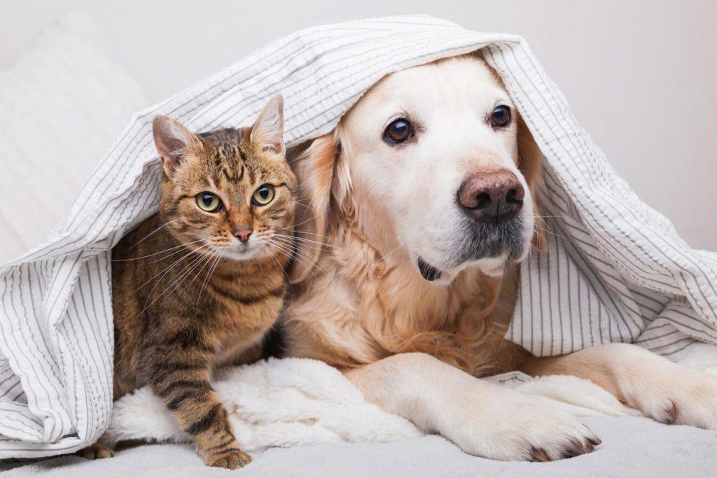 cohabitation-chiens-et-chats