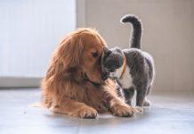 chiens-et-chats