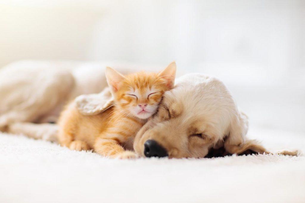 conseils-pour-relation-chiens-chats