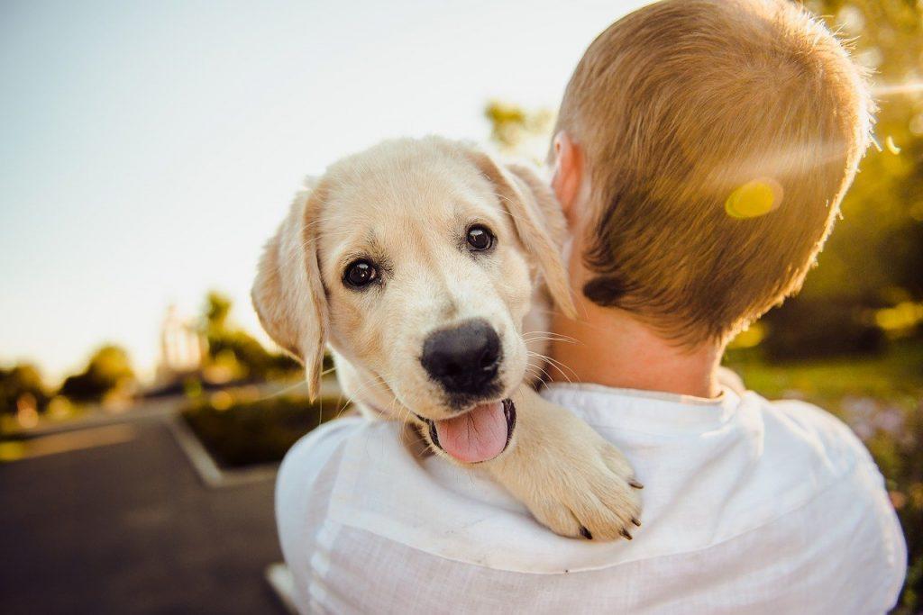 pour-soin-de-son-chien