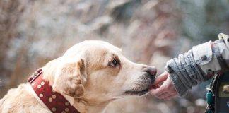 soin-de-son-chien
