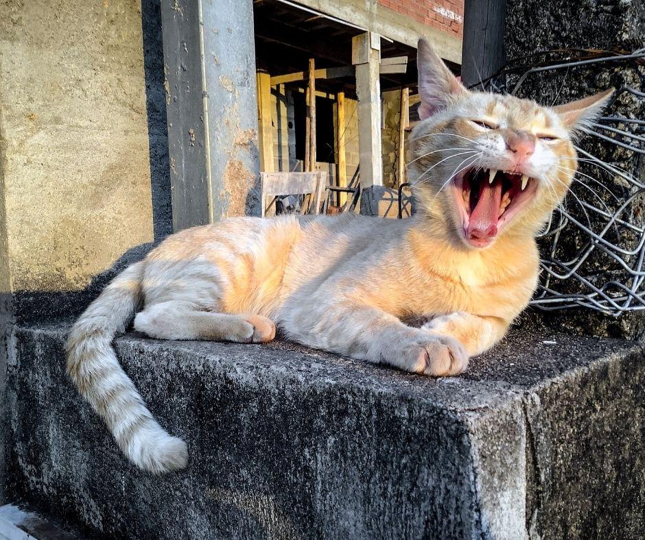 causes de l'éternuement chez le chat