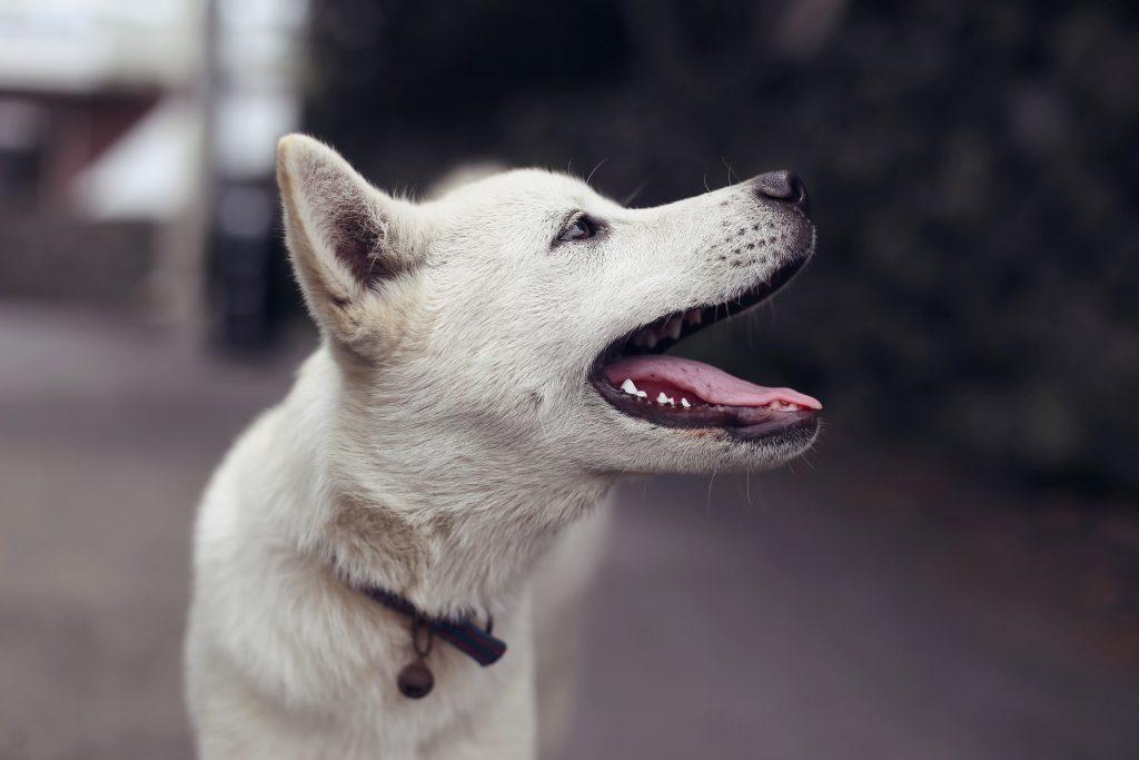 hygiène dentaire chez le chien